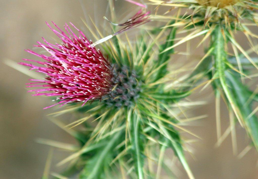Flora – et indlæg der er skræddersyet en målgruppe på to