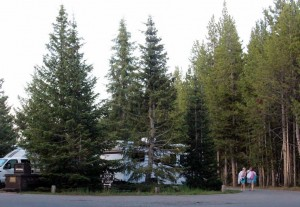 1-Yellowstone_1 269