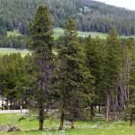 1-Yellowstone_2 047