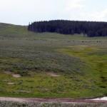 1-Yellowstone_2 071