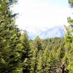1-Yellowstone_3 188